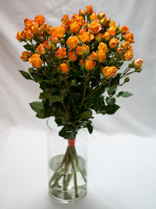 Роза кустовая оранжевая