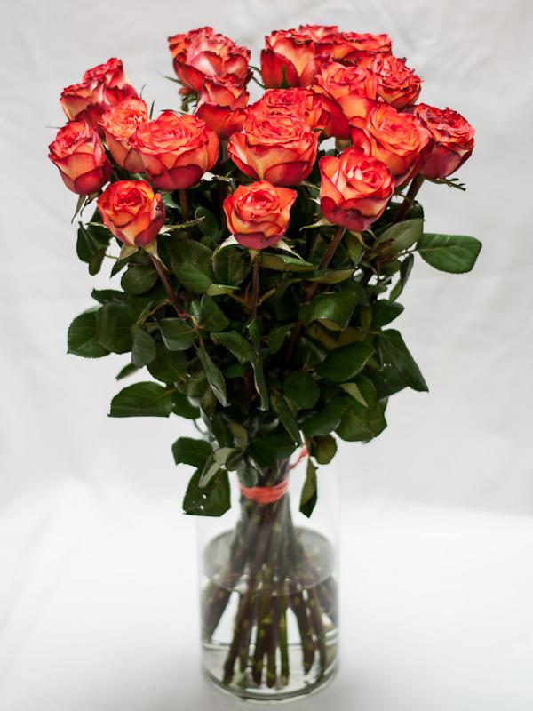 Роза Хай Мэджик