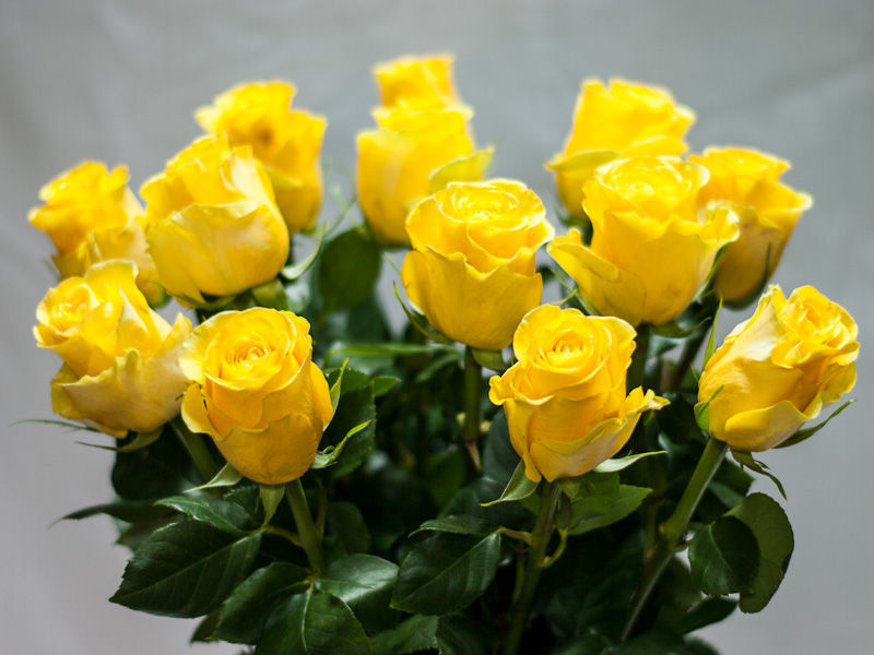 Роза Хаммер