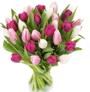 Тюльпаны микс 25 шт