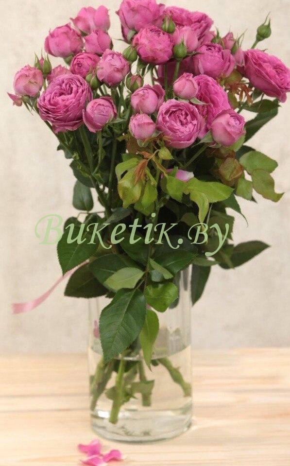 Роза кустовая малиновая