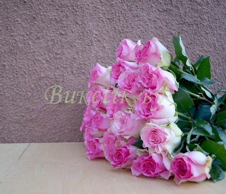 Розы сорт Malibu