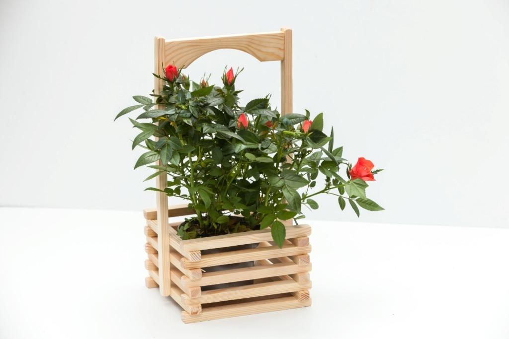 Горшечная роза в деревянном кашпо