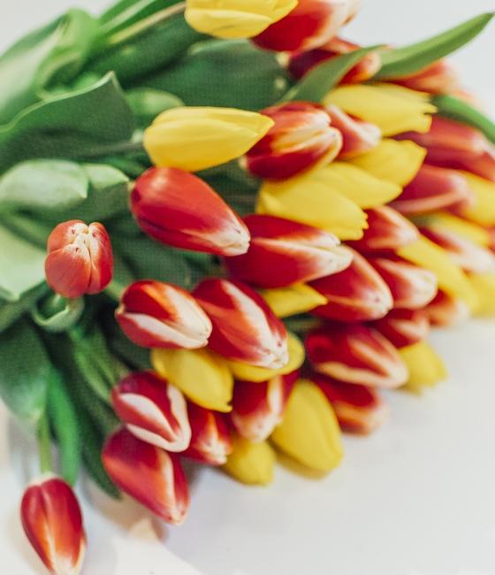 Микс желтых и красно-белых тюльпанов