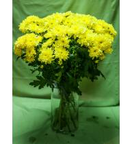 Хризантема желтая